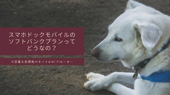 地面に伏せている白い犬